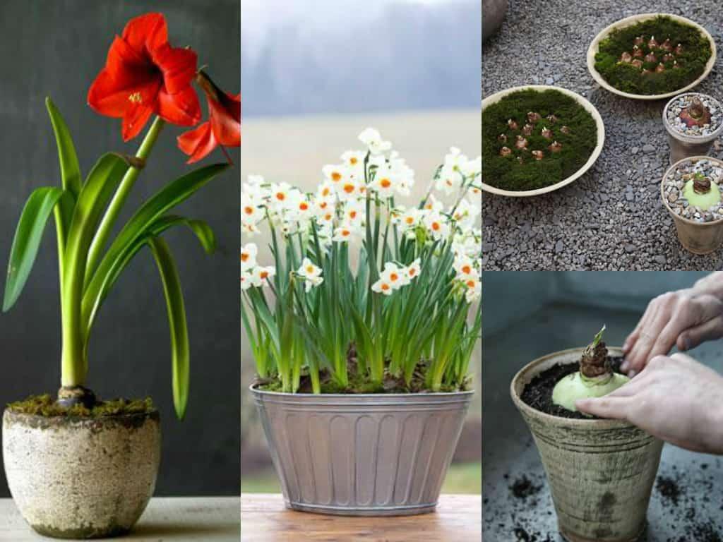 Piantare Ortensie Distanza : Piantare ortensie in vaso idee per il design della casa