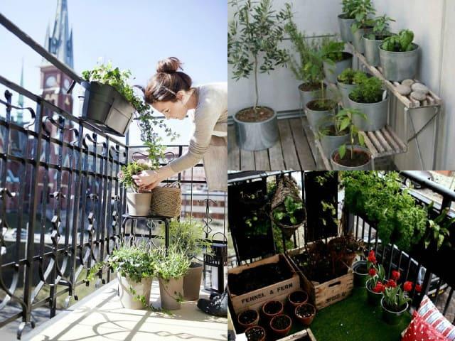 5 consigli per avviare le coltivazioni sul balcone guida for Divanetto da balcone