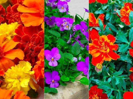 6 bellissimi fiori di primavera guida giardino for Fiori di primavera