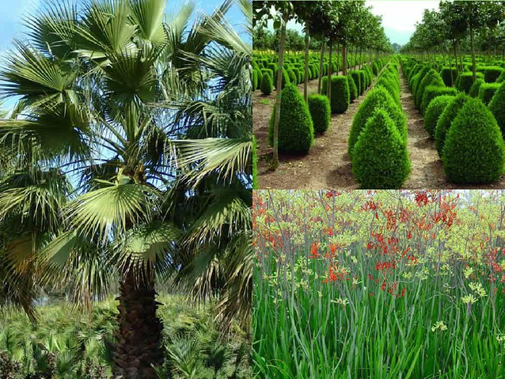 5 piante che sopportano la siccit guida giardino - Piante alte da giardino ...