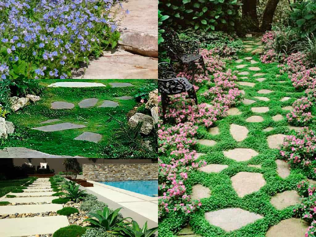 7 bellissime piante perfette per abbellire il vialetto - Piante per giardino ...