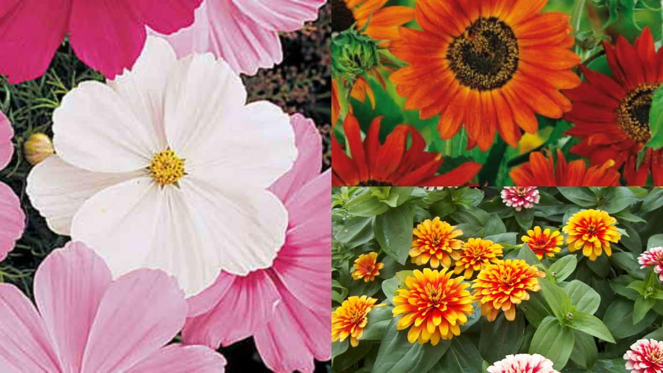 6 piante annuali semplici da coltivare partendo dalle for Piante annuali