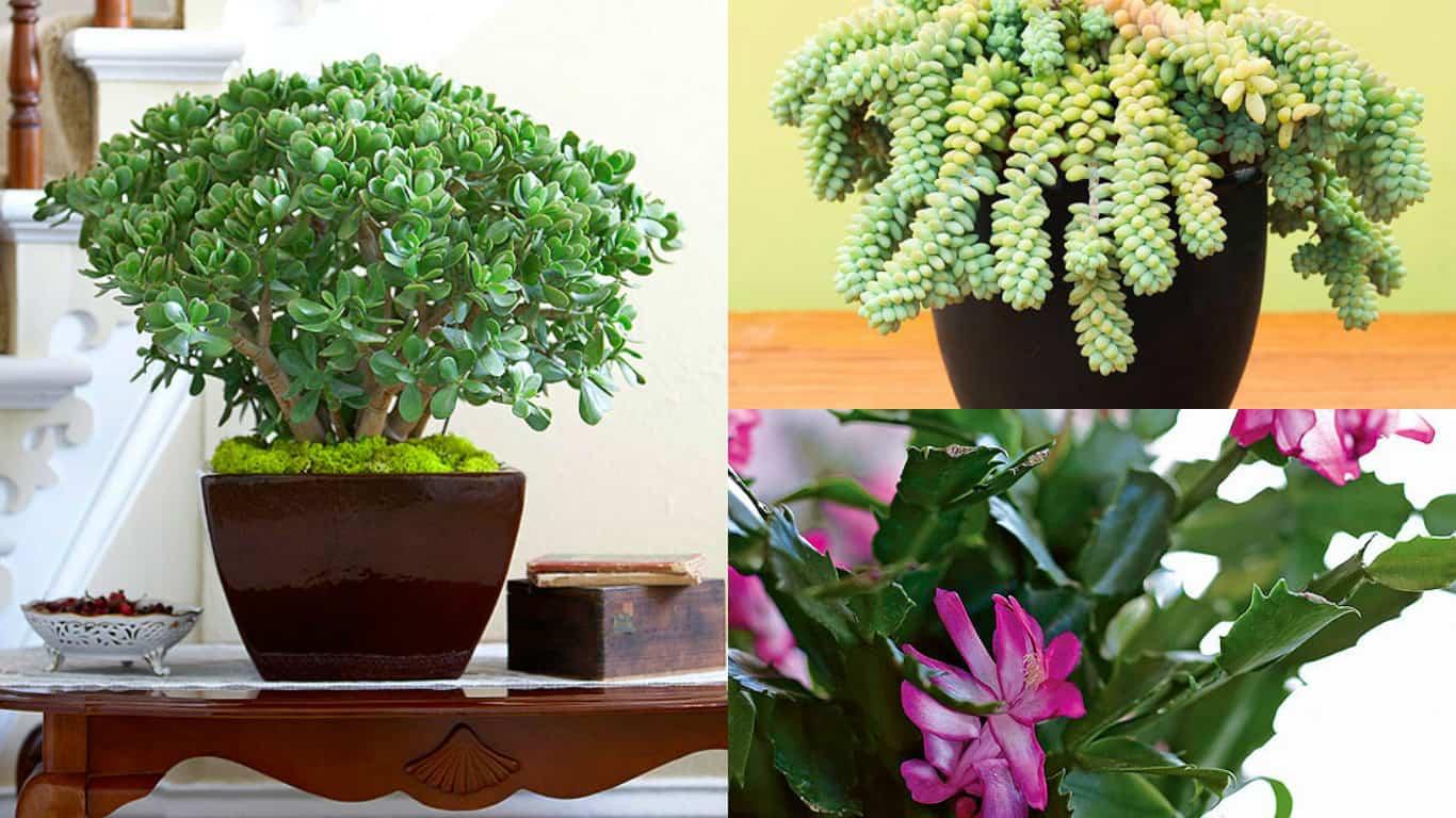 8 piante grasse molto decorative e ideali per la - Le piante grasse si possono tenere in casa ...