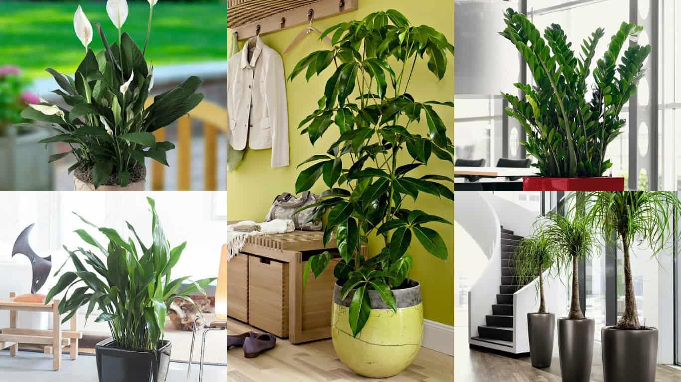 18 piante d appartamento che non richiedono manutenzione for Piante appartamento buio