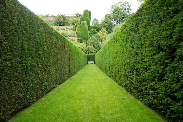 Come scegliere le siepi per il giardino: decorazione e privacy a tutta natura