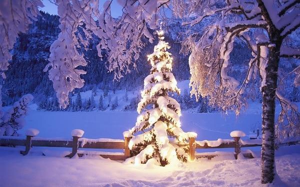 Decorazioni invernali per il giardino