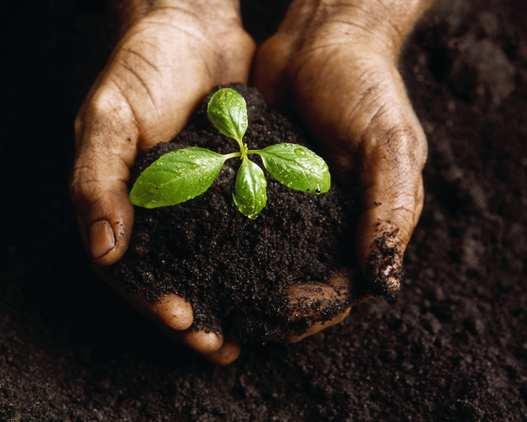 Il giardino organico e il giardinaggio biologico