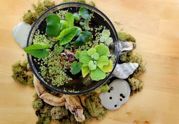Giardini d'acqua in miniatura