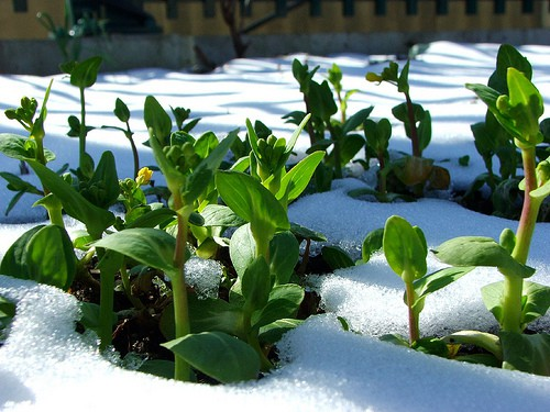 Giardinaggio invernale: suggerimenti e consigli