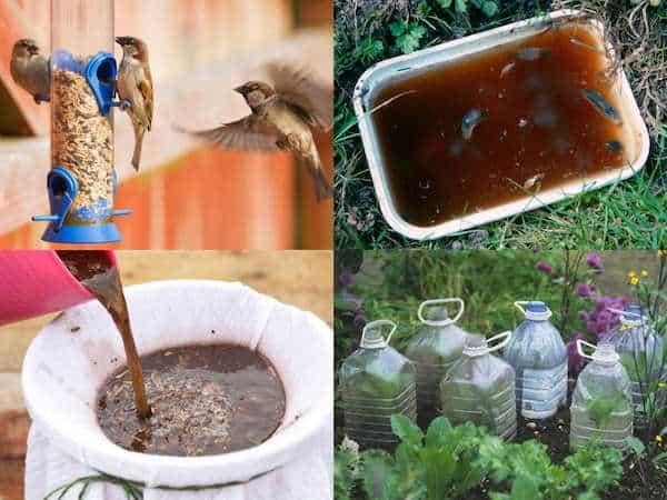 10 consigli per il giardinaggio ecologico