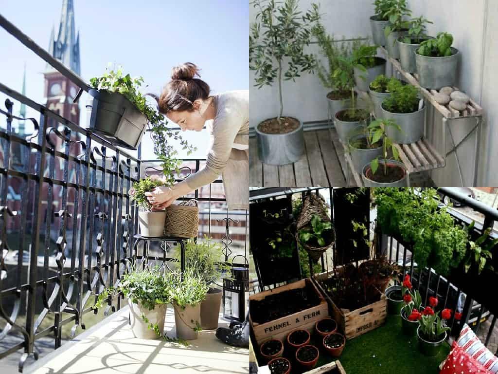 5 consigli per avviare le coltivazioni sul balcone