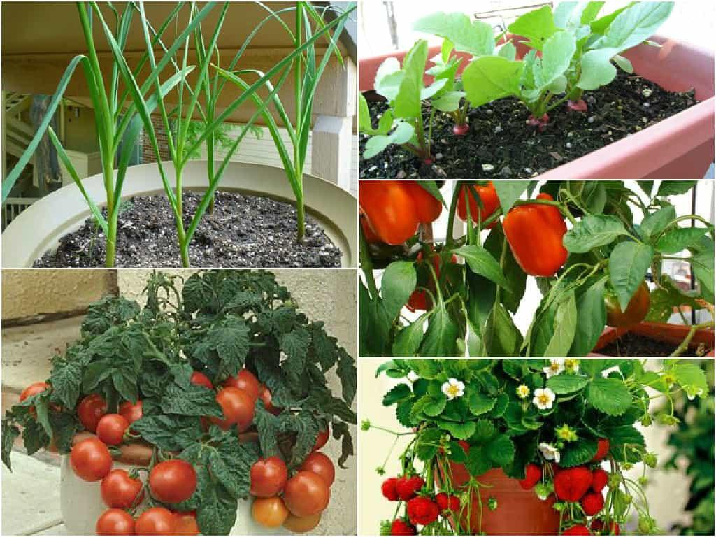 Ortaggi e frutti da coltivare in vaso