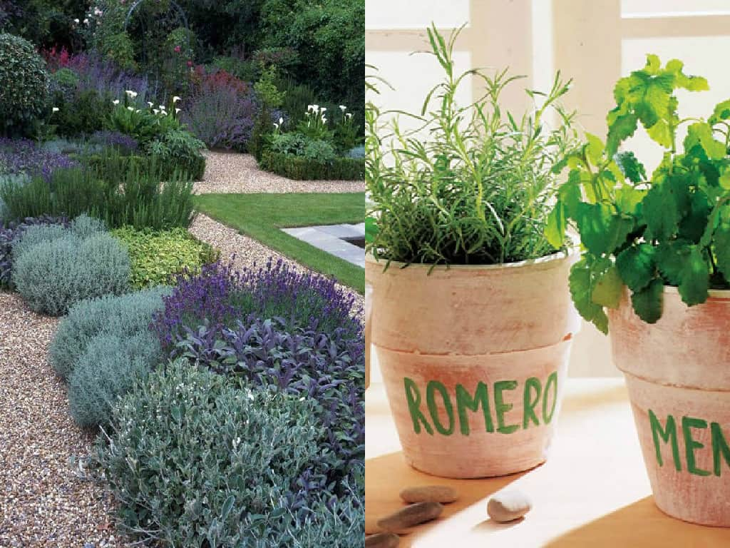 10 errori comuni nella coltivazione delle erbe aromatiche