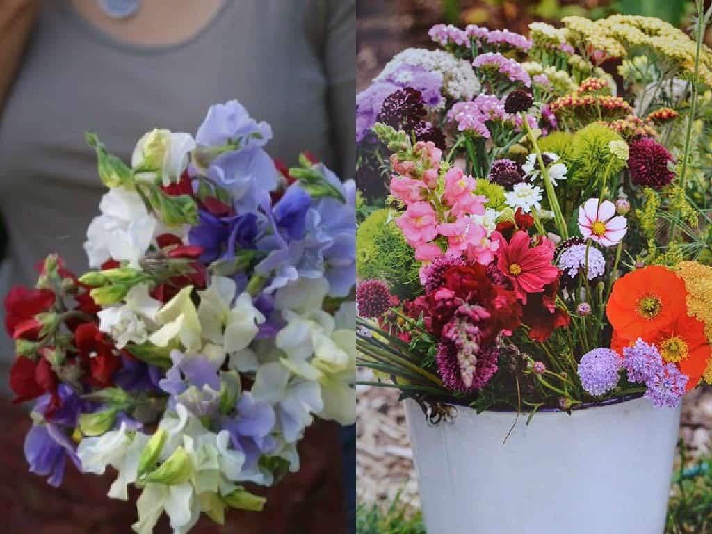 Coltivare Fiori Da Recidere 7 consigli per coltivare fiori da recidere - guida giardino