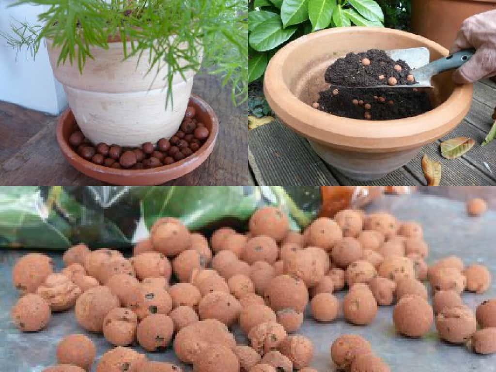 """5 modi per utilizzare le """"palline di argilla"""" nel giardinaggio"""
