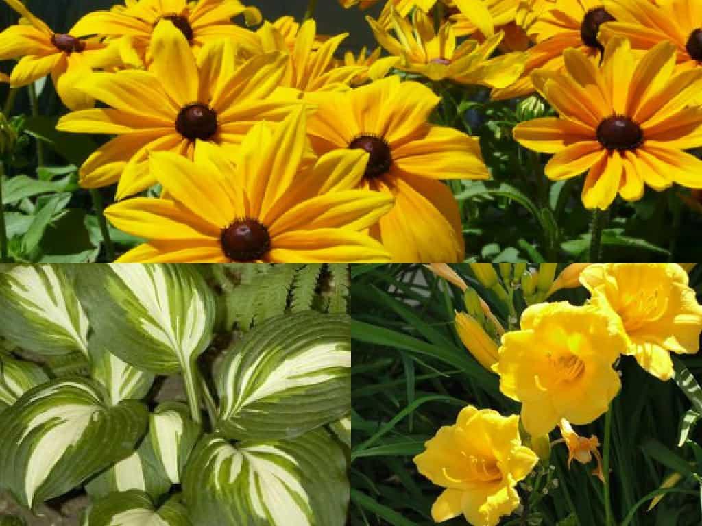 Fiori Campanelle Da Balcone 5 bellissime piante a bassa manutenzione - guida giardino