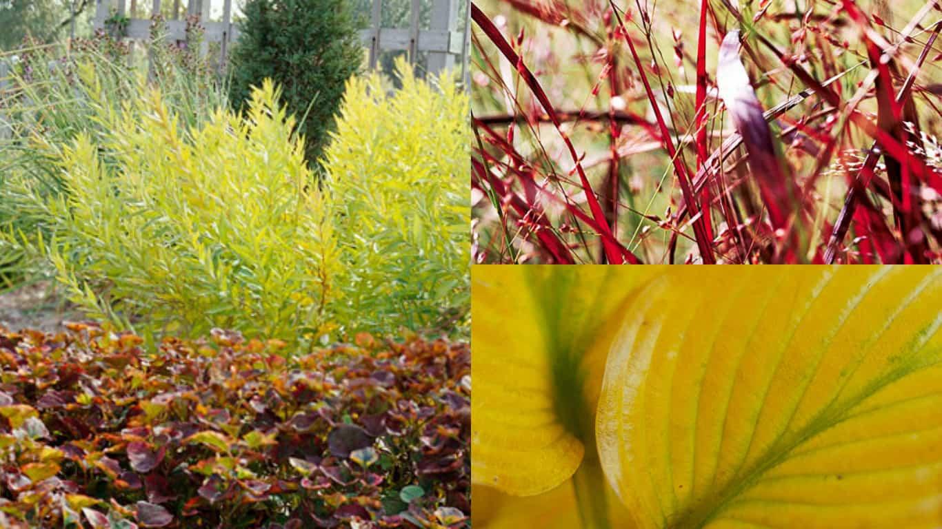 6 piante perenni dai magnifici colori autunnali