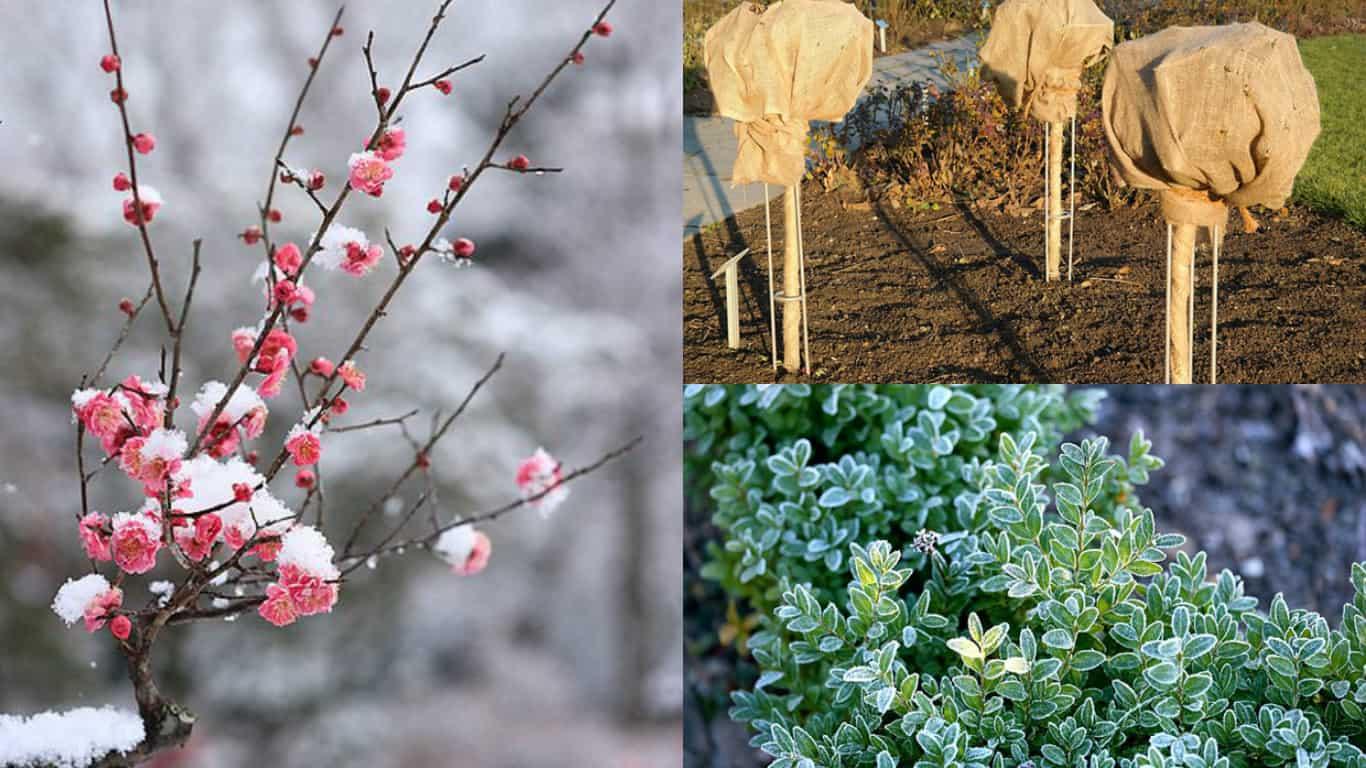 5 consigli per la cura delle piante in inverno