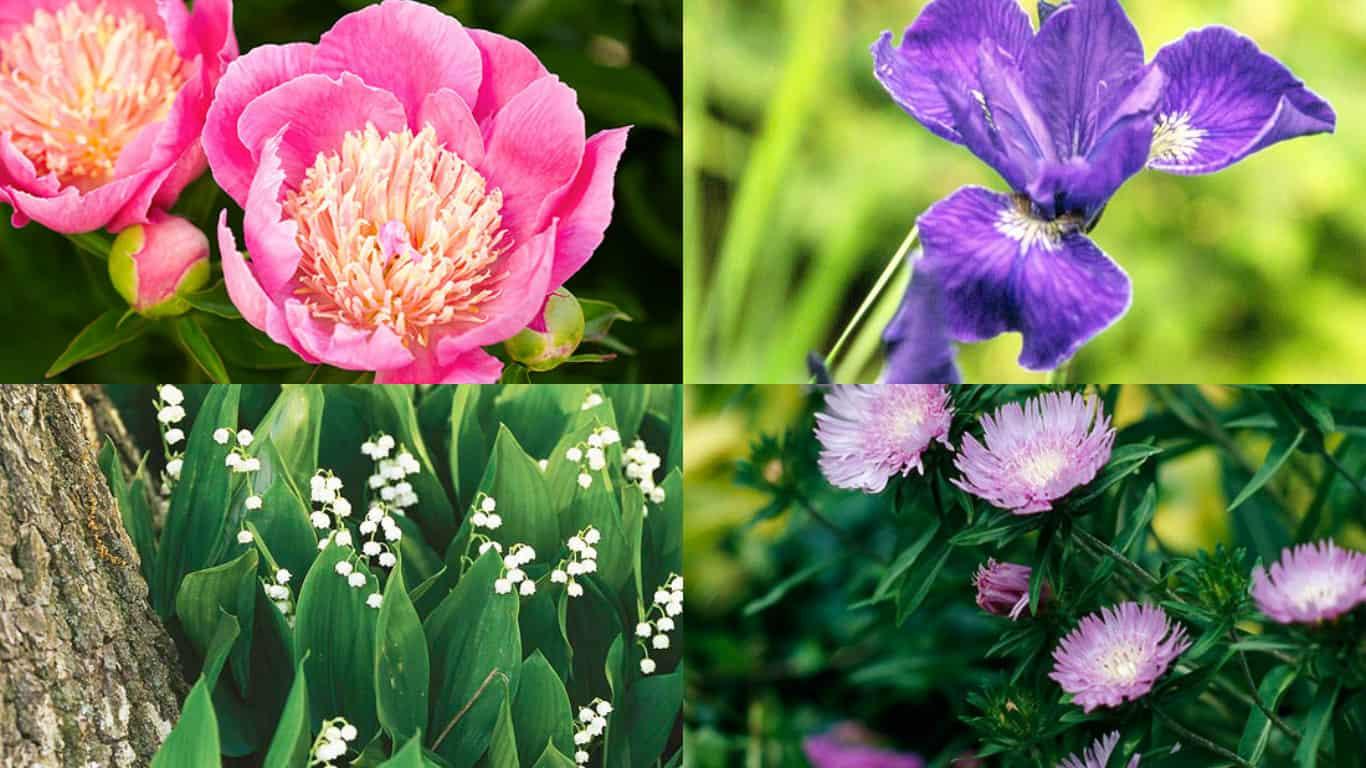 15 magnifiche piante invernali