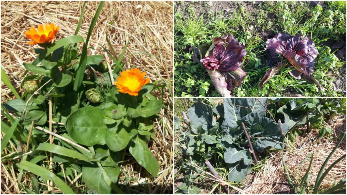 Fiori Da Piantare Nell Orto agricoltura sinergica: cos'è e come ricrearla nell'orto di