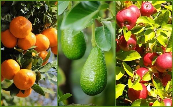 9 consigli per ottenere un'ottima produzione di frutta dai propri alberi