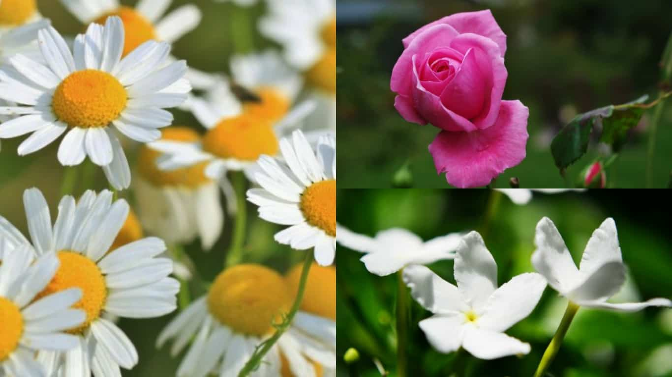 5 splendidi fiori in grado di proteggere la pelle