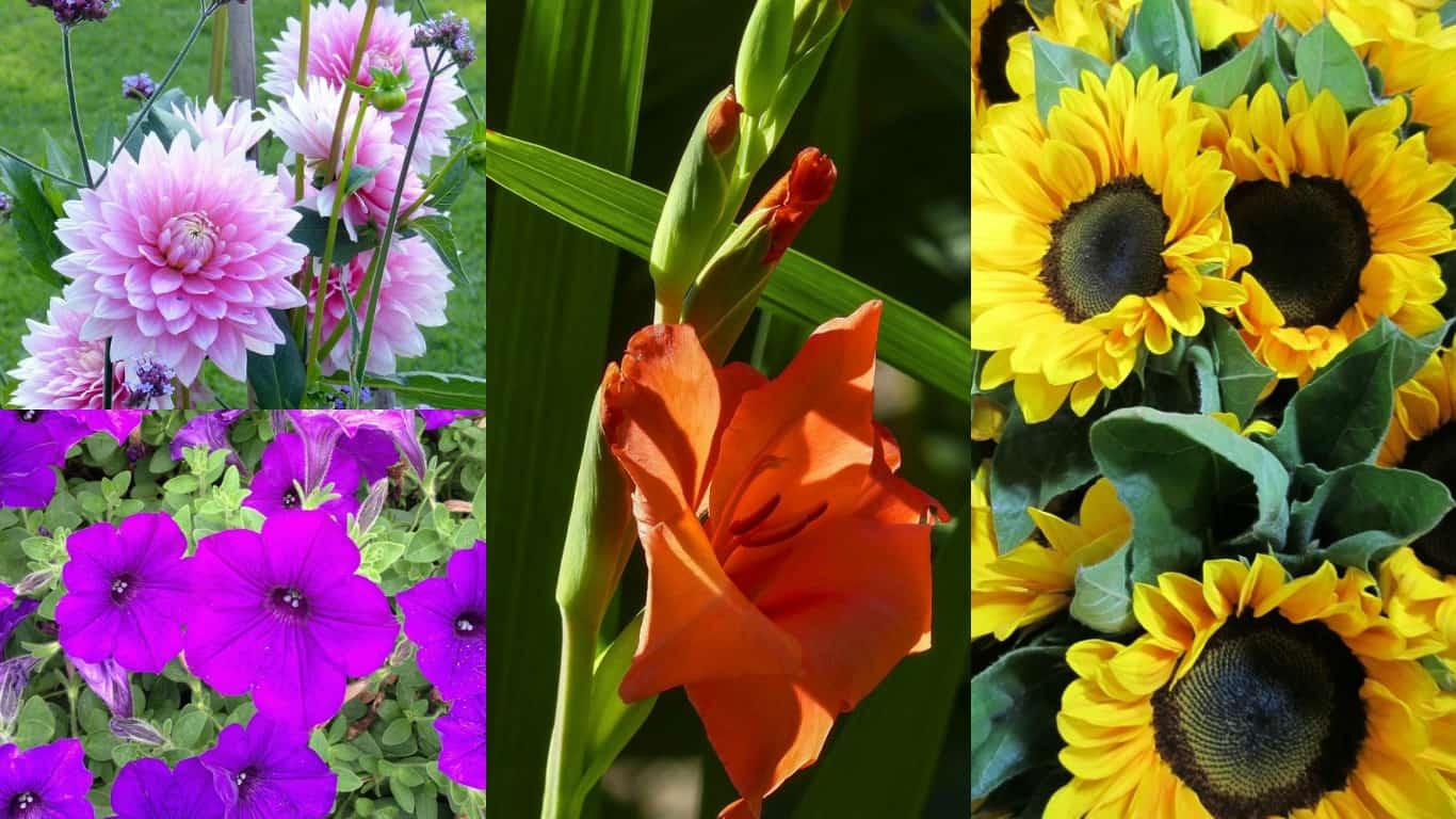Fiori Che Amano Il Sole 10 stupendi fiori da piantare in primavera - guida giardino