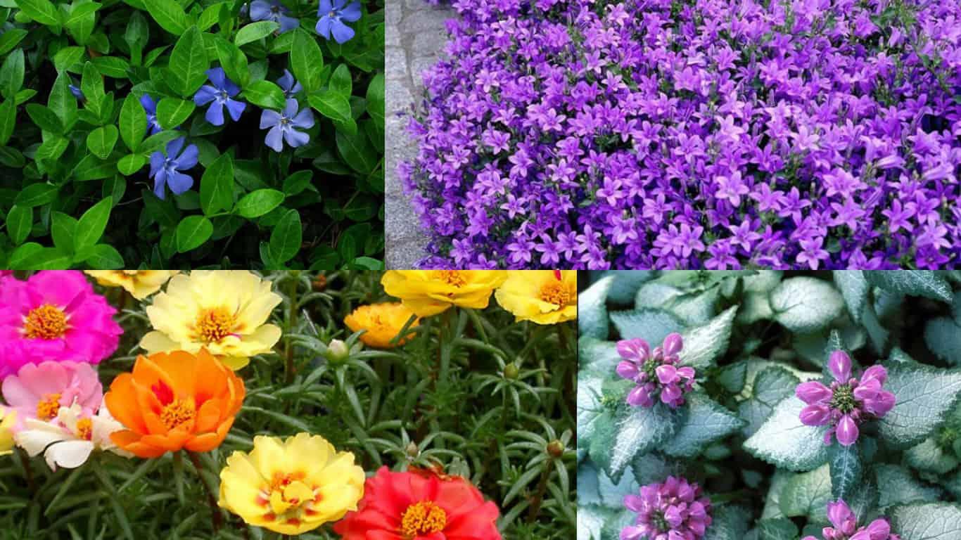 Fiori Da Giardino In Montagna 12 piante ideali per realizzare una copertura del terreno