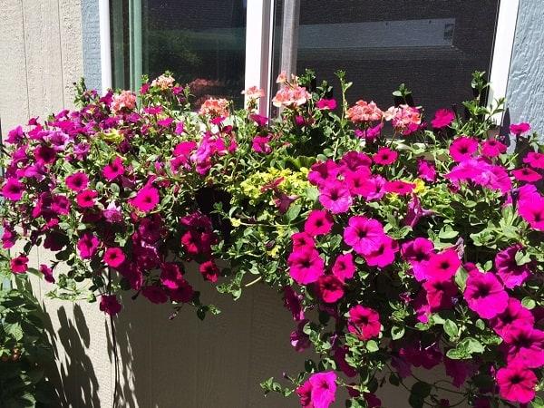 Decorare con le piante: come preparare una fioriera da posizionare sotto alla finestra di casa