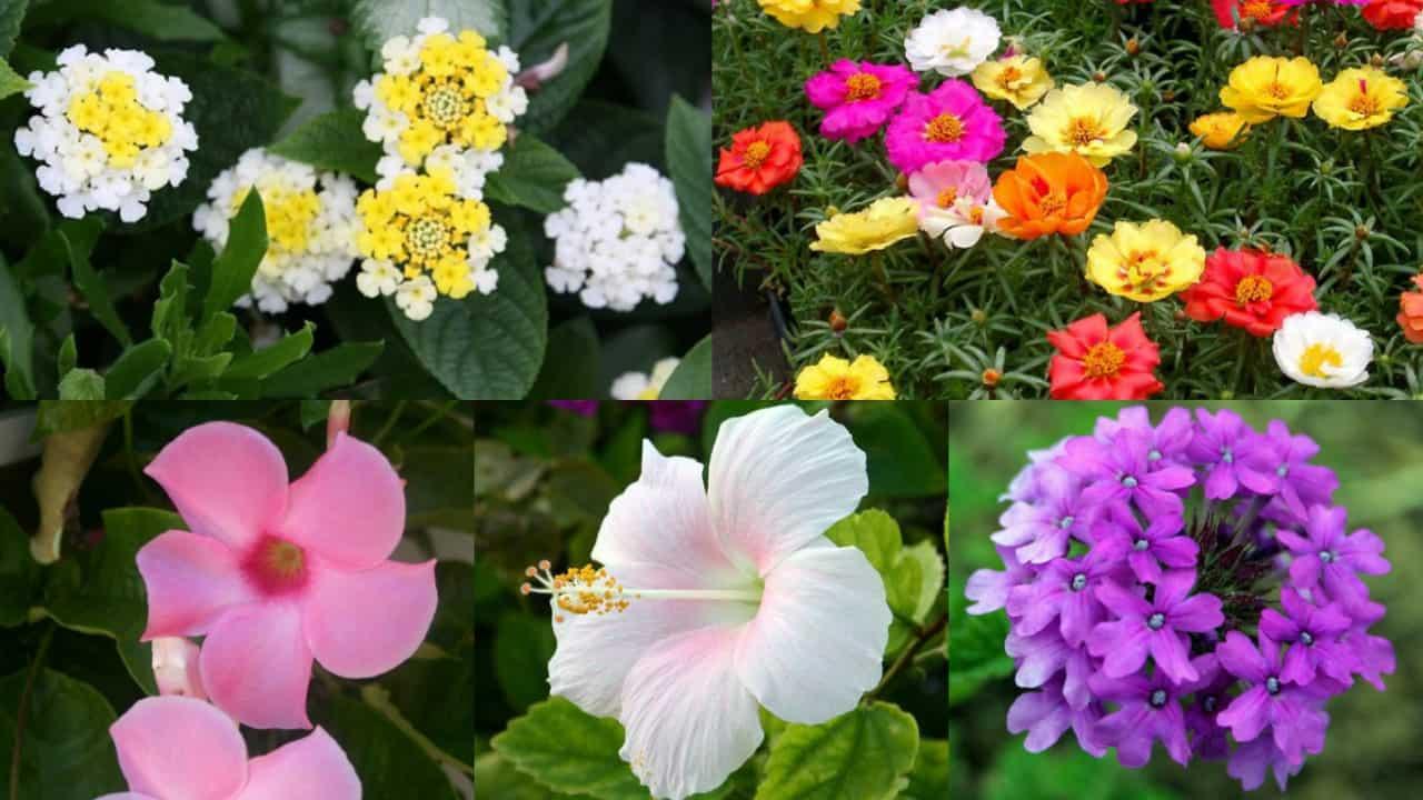 Vasi Bianchi Per Fiori Da Esterno.10 Magnifici Fiori Da Coltivare In Pieno Sole Guida Giardino