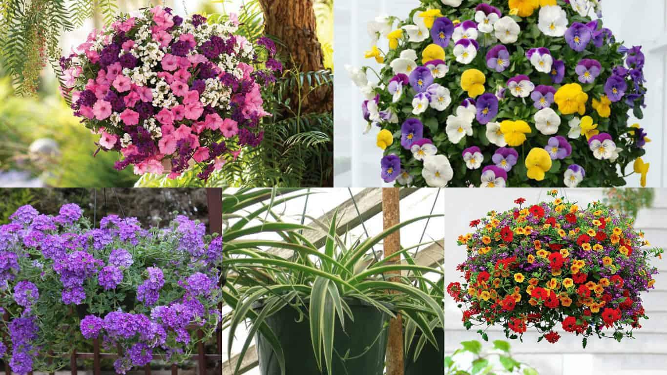18 piante ideali per la coltivazione in vasi appesi