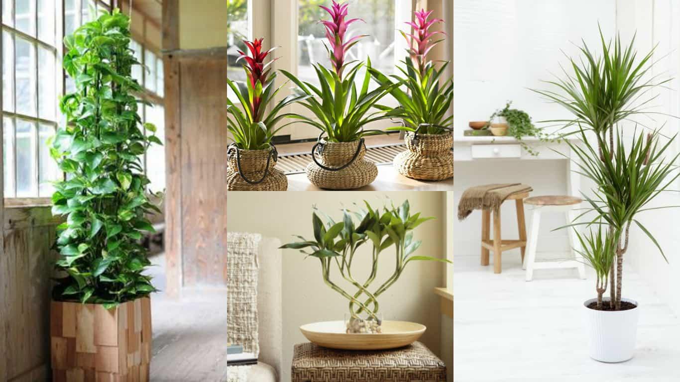 7 piante da interni, ideali per giardinieri poco esperti