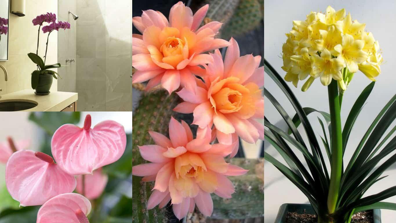 8 piante da interni con cui abbellire le stanze di casa