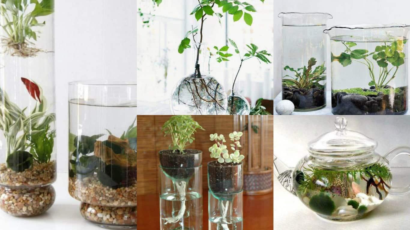 8 idee creative per realizzare un giardino acquatico indoor