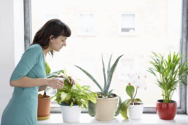 """7 errori da evitare per non """"uccidere"""" una pianta da appartamento"""