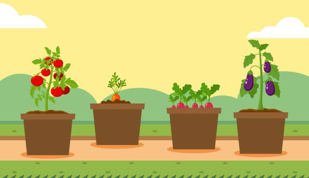 11 ortaggi da coltivare in vaso