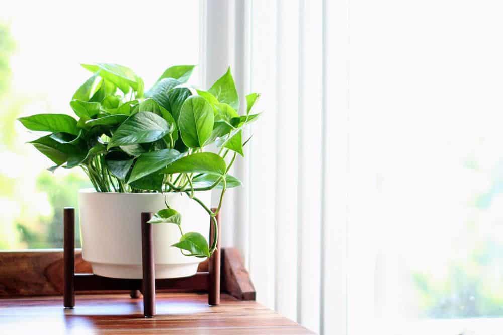 5 piante perfette per arredare l'ufficio