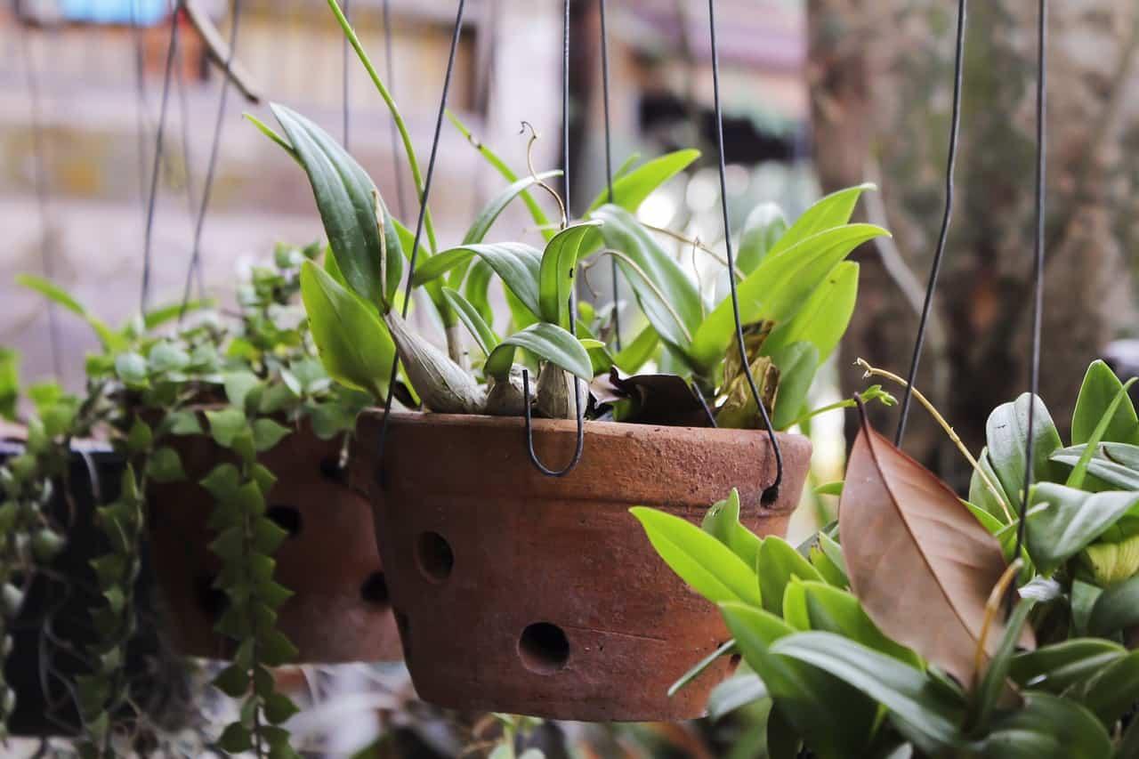 15 piante da tenere lontane da bambini e animali