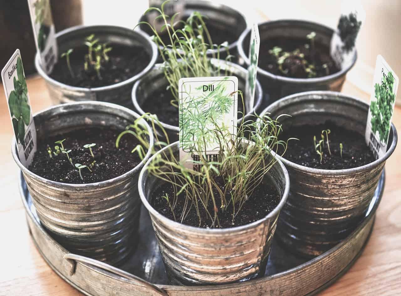 Come Far Morire Una Pianta il giardino delle erbe aromatichedentro casa! - guida