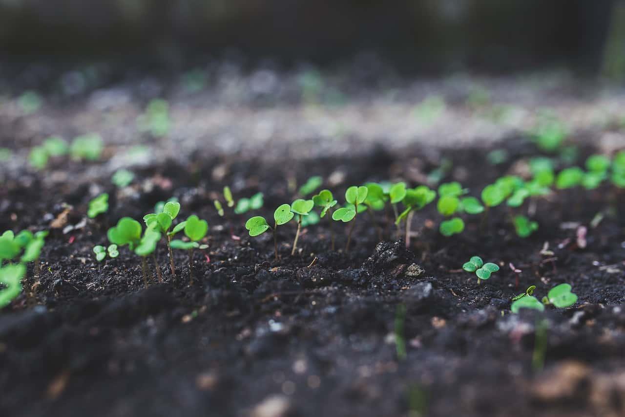 Cosa Seminare A Gennaio l'orto a gennaio: tutto quello che c'è da sapere - guida