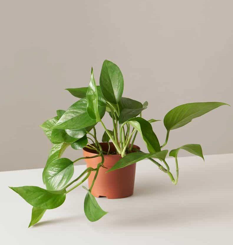 9 piante per la casa impossibili da uccidere
