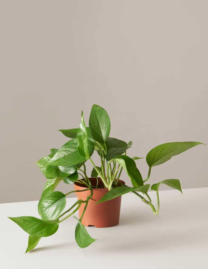 Come Far Morire Una Pianta 9 piante per la casa impossibili da uccidere - guida giardino