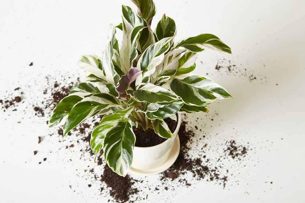 Come rinvasare una pianta…senza fare danni!