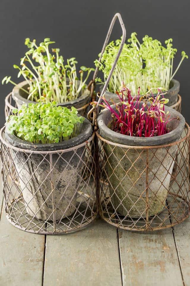 8 ortaggi da coltivare dentro casa