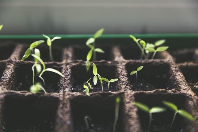 Coltivare partendo dai semi: la guida completa in 6 passi