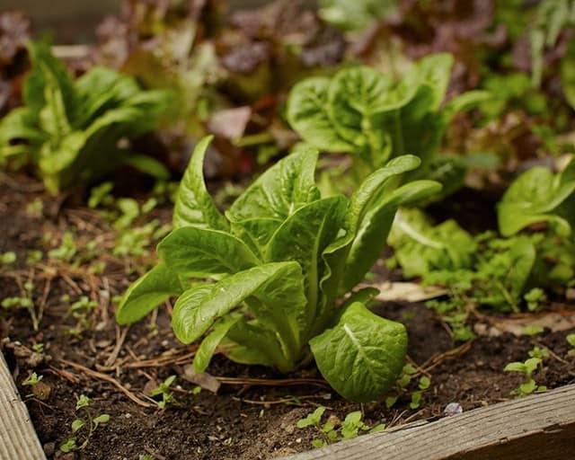 Coltivare l'orto senza spendere soldi: 13 trucchi che funzionano davvero