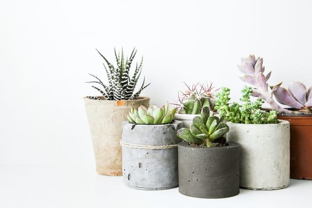 Come curare le piante grasse