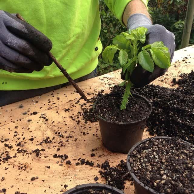 Le tecniche di riproduzione delle piante