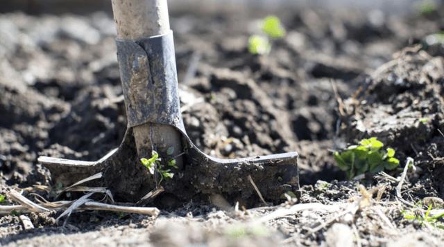 L'attrezzatura di base del giardiniere