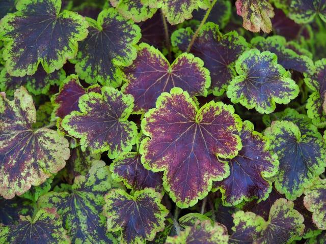 7 piante primaverili belle e originali